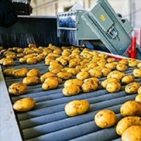 Potato set 6S strict selection potato wholesale